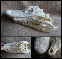 Comparison: Caiman vs. Crocodile by CabinetCuriosities