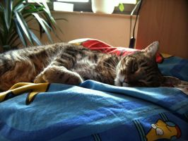 tiger in tha pillow by xe3tec