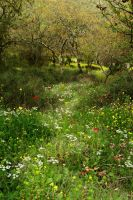 Spring Path by ahermin
