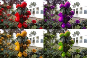 Different coloured berries by ezy94