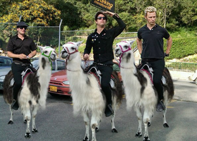 Green Day and Llama by BillieJoe1972