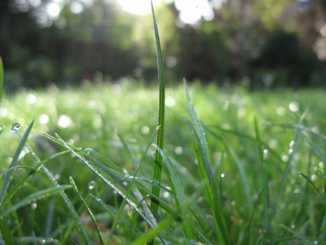 Dewy Grass by Arahsay