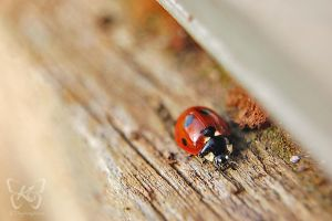 Ladybugs Life III by kyokosphotos