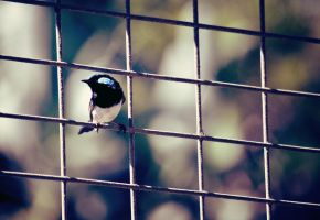 Fly Between the Bars by RaineyJ