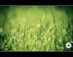 Grass and Bokeh by Mfotografie