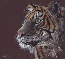 Tiger by LoomArts