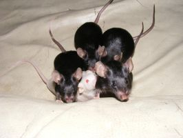 Mouse group shot by Fennic
