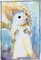 Another baby rat by cajsa