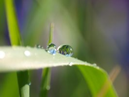world in a drop by willos2