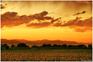 Summers Golden Glow by kkart