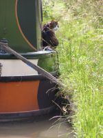 The canal cat by InHerHollowHeart