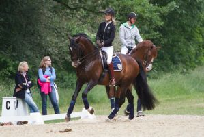 Lusitano Dressage Training Canter Stock by LuDa-Stock