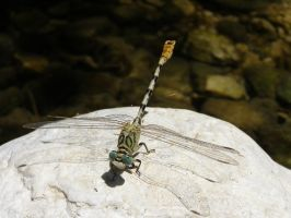 The Dragonfly by GorALexeY