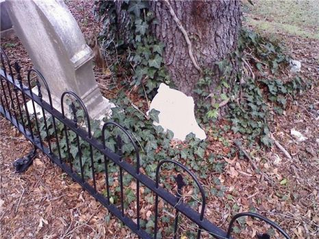 Cemetery Vines by BeautyWillSaveUs