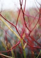 Veins and Nerves by Spaezle