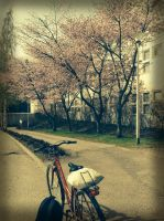 On my way home.. by chikuQ