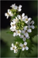 The small white ones by 47X
