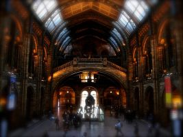 Natural History Museum by murgymurge