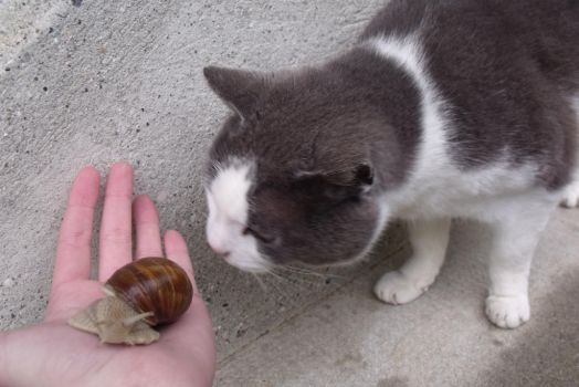 The Snail and the Cat by CheshyFloupy