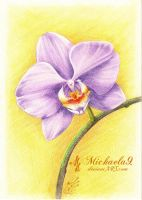 The beauty of violet orchid by Michaela9