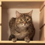 Cat in a box II by starykocur