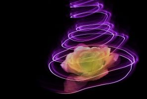 lightpainting - rose by AdrianaKH-75