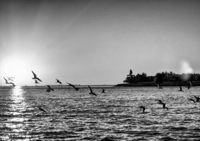 Flying low by zootnik