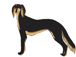 So, here is the saluki :3 by Meme00