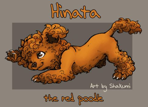 Hinata - red poodle by SHAKUMl