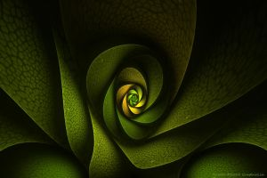 Rosette by GraphicLia