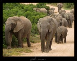 Addo by Crooty