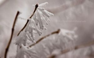 Frost-1-3c by melly4260