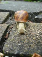 Snail by angel739