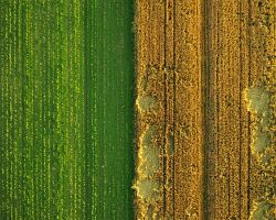 Aerialphoto - Fields by Aero73