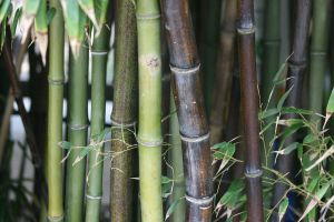 Bamboo3 by newdystock