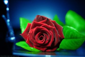 rose on my desk by hoschie