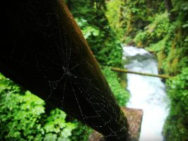 Webs by evelynrosalia