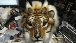 Dragon tiger in process pic1 by Thundolis