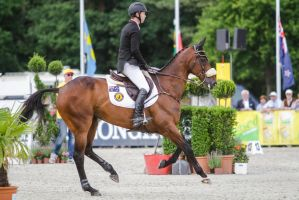 3DE Show Jumping Phase Bitless Stock 40 by LuDa-Stock