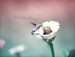 Flower-taste by Knopp-Art