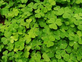 Jeweled Shamrocks by speedyfearless