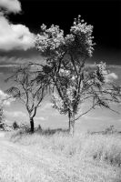IR Trees by PEACEBRAKER