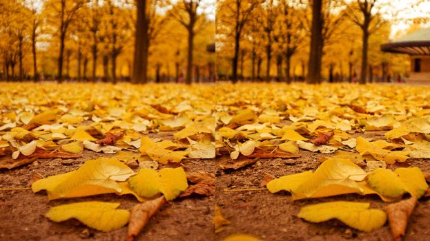 Floor of Autumn by StereoJiyone