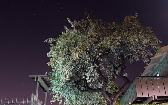 Night Blossoms by Leitmotif