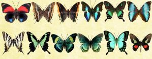 Mac Icons - Butterflies Set 5 by Nastino47