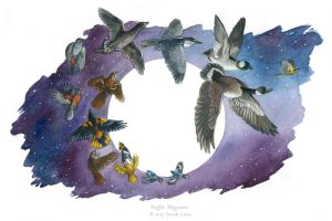 Night Migrants by windfalcon
