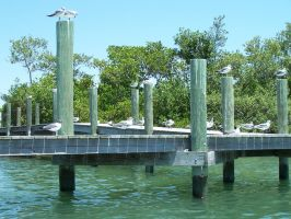 Seagull Dock 2 by Polly-Stock
