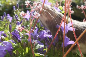What wonders through the flower beds by Lilyfer