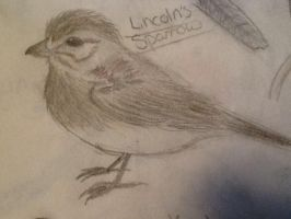 Lincoln's Sparrow by WolfLover0925