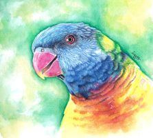 Parrot by Laaury